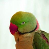 На выставке птиц. Самый яркий персонаж. :: Татьяна_Ш