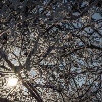 Серебро зимы :: Алексей -