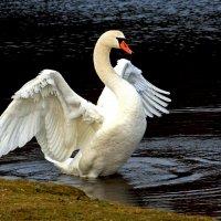 Птица - ангел :: Alexander