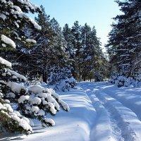 А здесь ещё царит январь.. :: Лесо-Вед (Баранов)