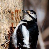 весеннее застолье) :: linnud