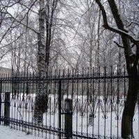 простым карандашом зимы... :: Галина Филоросс