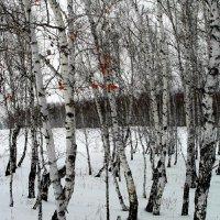 Зимние берёзы. :: nadyasilyuk Вознюк