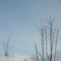 снег :: Катя Кнутова