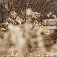 Веточки в снегу :: sorovey Sol