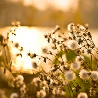 Память последней осени :: Ната Кова