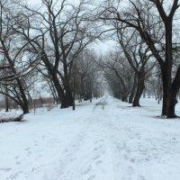 Зимний парк :: Наталья Честных