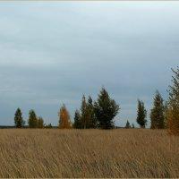 На сентябрьском ветру :: Татьяна Ломтева