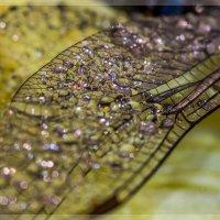 Крыло стрекозы :: Александр Хорошилов