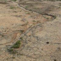засуха.... :: tgtyjdrf