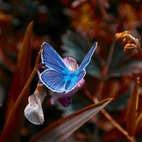 Голубой Ангел :: Альберт Ханбиков
