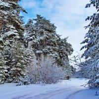 Уставшею мелодией зимы... :: Лесо-Вед (Баранов)