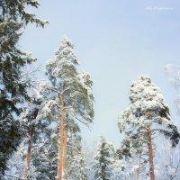 Очарование зимнего леса :: Ева Олерских