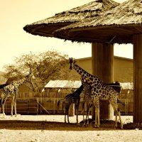 Зоопарк Абу -даби . :: Валентина Потулова