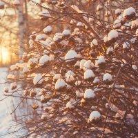 Зимний вечер :: Алексей Дмитриев