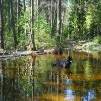 Лесной, весенний ручей :: Павлова Татьяна Павлова