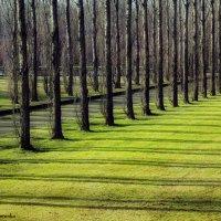 Весна пришла :: Denis Makarenko