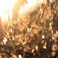 Солнечные денечки :: Кристина Плавская