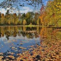 Заметает листопад осеннее безмолвие. :: mike95