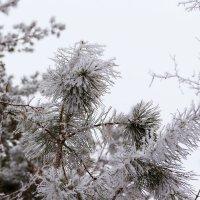 Зарисовки снегом :: Юрий Стародубцев