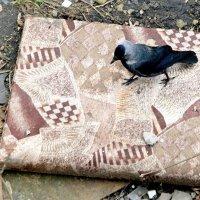 Вот  и  диванчик  прикупила....... :: Валерия  Полещикова