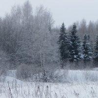 Тихо в лесу... :: Святец Вячеслав