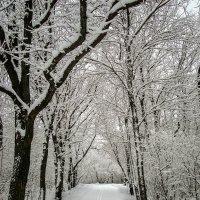 графика зимы :: Андрей ЕВСЕЕВ