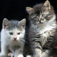 Котятки :: оля san-alondra