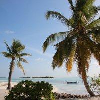 Мальдивы :: Дмитрий Хохуля