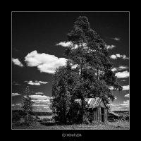 Сосновый дом :: BiLLArs |Саша Белых|