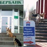 """Нам в """"Сбербанке"""" кредита не дали и дружно в """"Восточный"""" мы побежали... :: Елена Елена"""