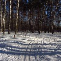 Img_2336 - Вариации на тему приближения Весны :: Андрей Лукьянов