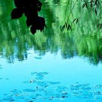 Зеленые зАмки возводит Природа... :: Milocs Морозова Людмила