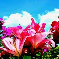 Цветы на фоне неба :: Милешкин Владимир Алексеевич