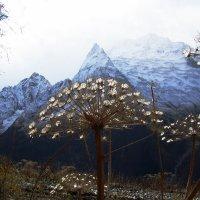 Ледяные цветы :: Alexander Varykhanov