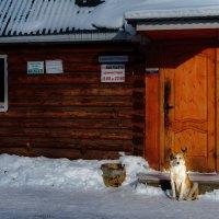 Белый воротничок :: Андрей Липов