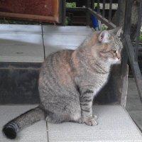 Кошка Матрёна на даче у бани :: Юрий А. Денисов