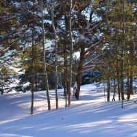 Прогулки в лес :: Вера Андреева
