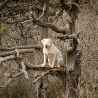Собака-обезьяка :: Алексей Яковлев