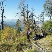 В горных лесах на тропах туристических :: Сергей Анатольевич