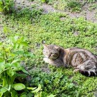 Весенний кот :: Александр Деревяшкин