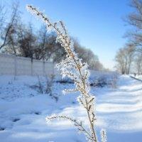 В снежных хрусталиках :: Андрей Снегерёв