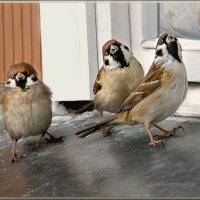 три товарища :: linnud