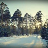неделя до весны :: Евгения Семененко