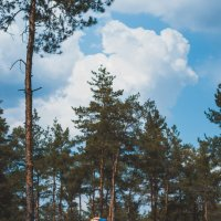 В лесу. :: Irin M.