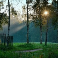 Утро в Павловском парке :: Тамара Рубанова