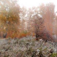 осенний лес :: Татьяна Малинина