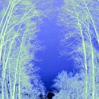 Зимний лес. :: Oleg4618 Шутченко