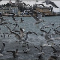 Птичий базар :: Вера
