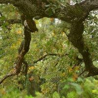 Интересное дерево :: Marina Timoveewa